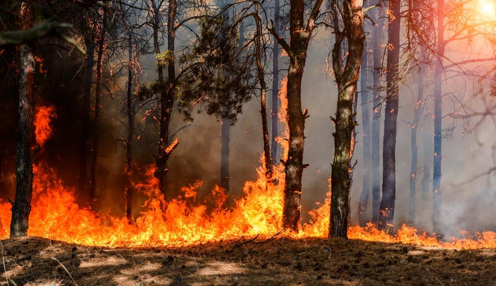 Healthstories-πυρκαγιά